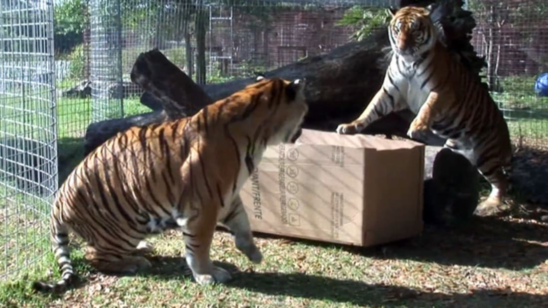 YouTube / Big Cat Rescue