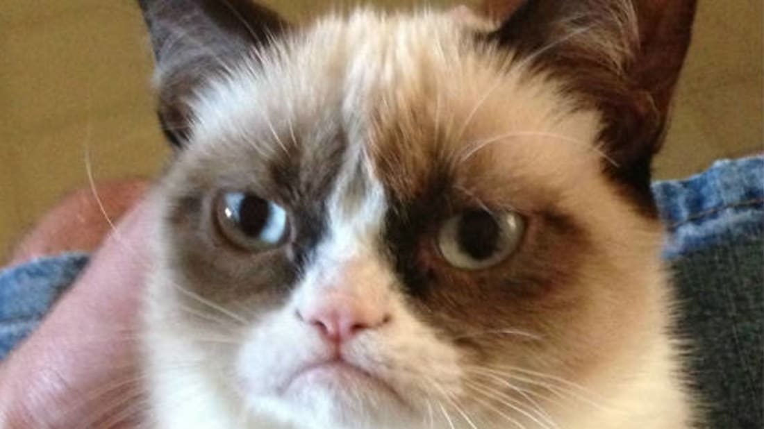 Image result for grumpy cat meme