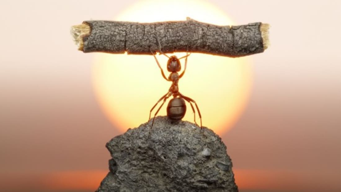 Amazing Photos Of Ants Being Awesome Mental Floss
