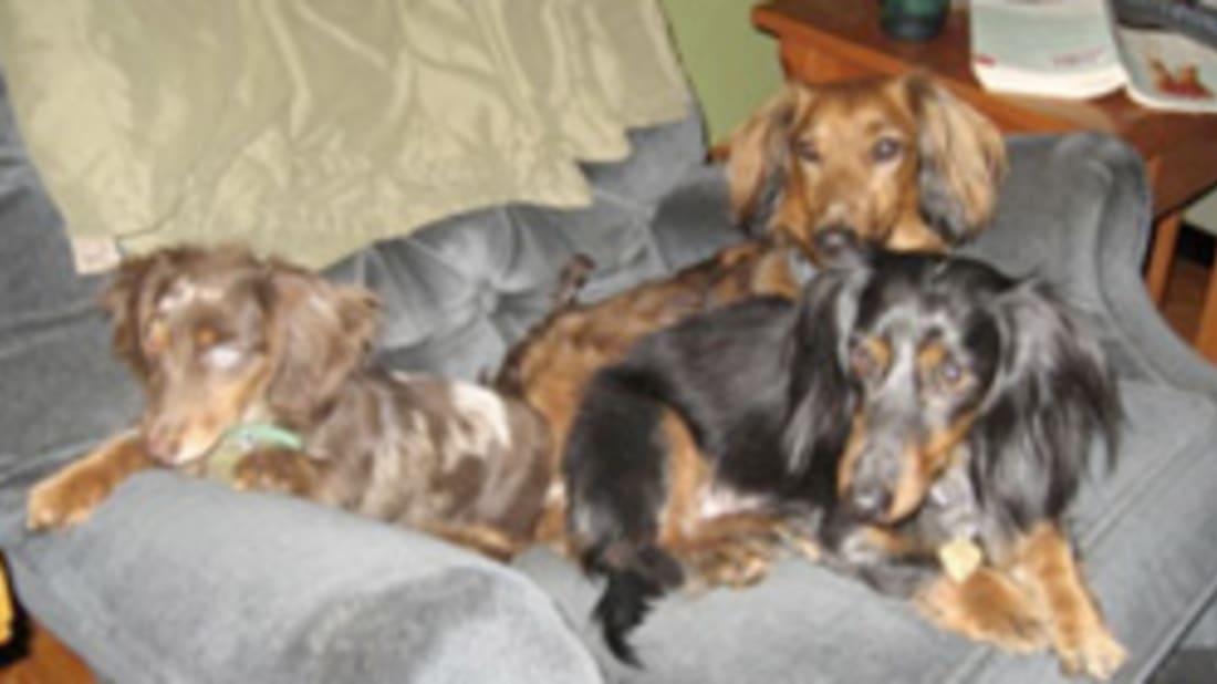 Famous Wiener Dogs in History | Mental Floss