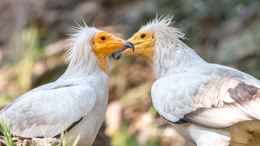 14 Things You Should Know About Vultures Mental Floss