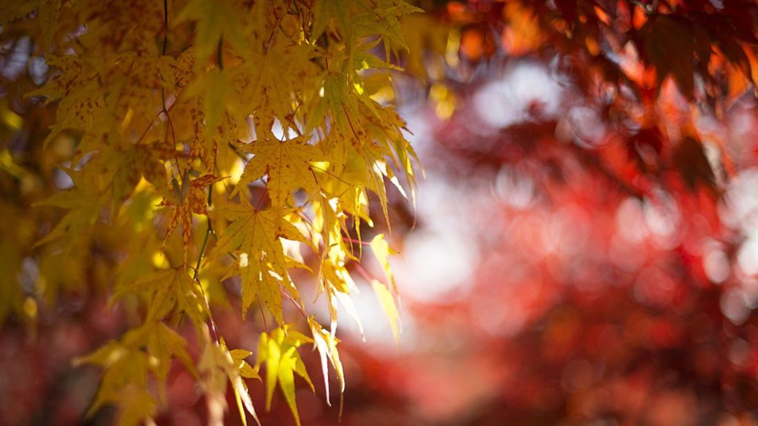 Drought Disrupts Fall Foliage