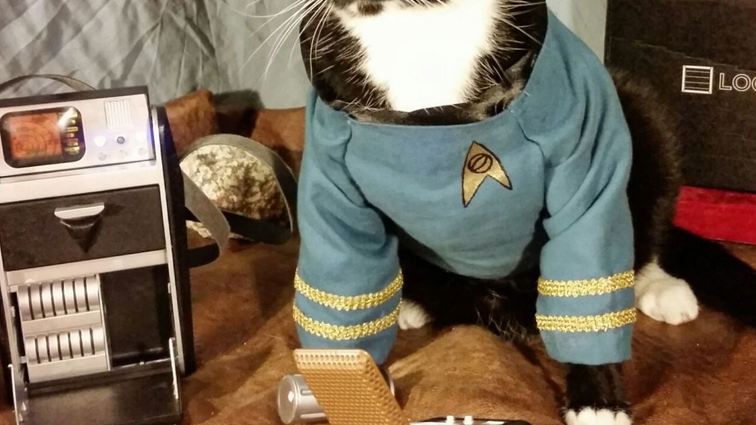 Cat Cosplay // Permitted