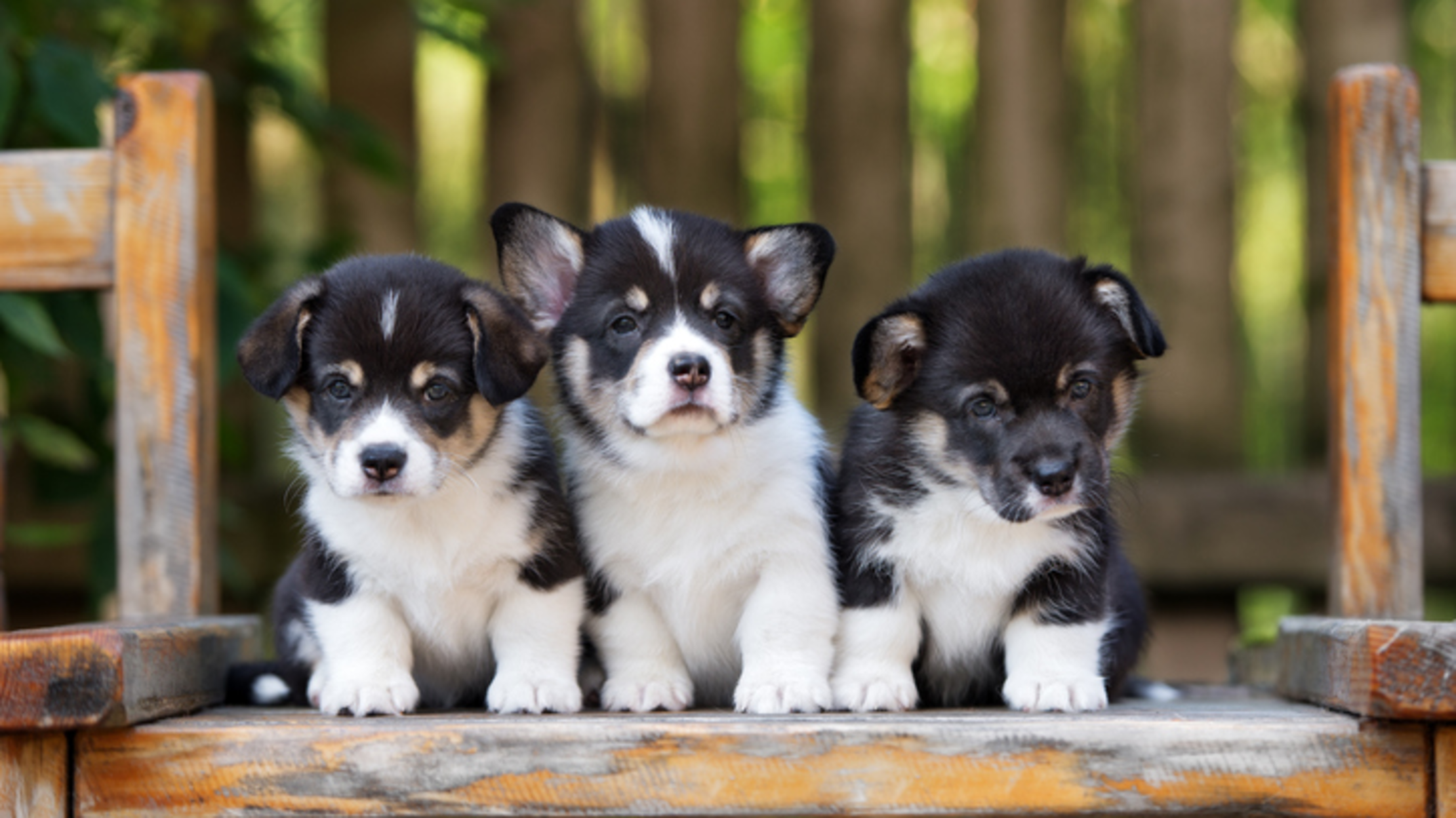 Ongebruikt 12 Scientifically Cute Facts About Puppies | Mental Floss MO-96