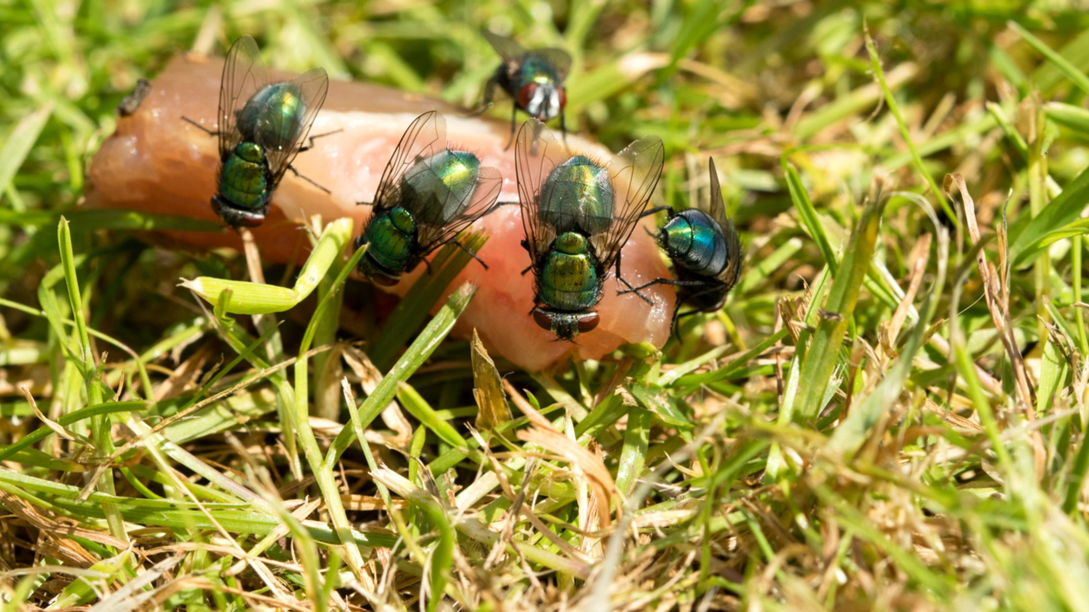 13 Secrets Of Forensic Entomologists Mental Floss