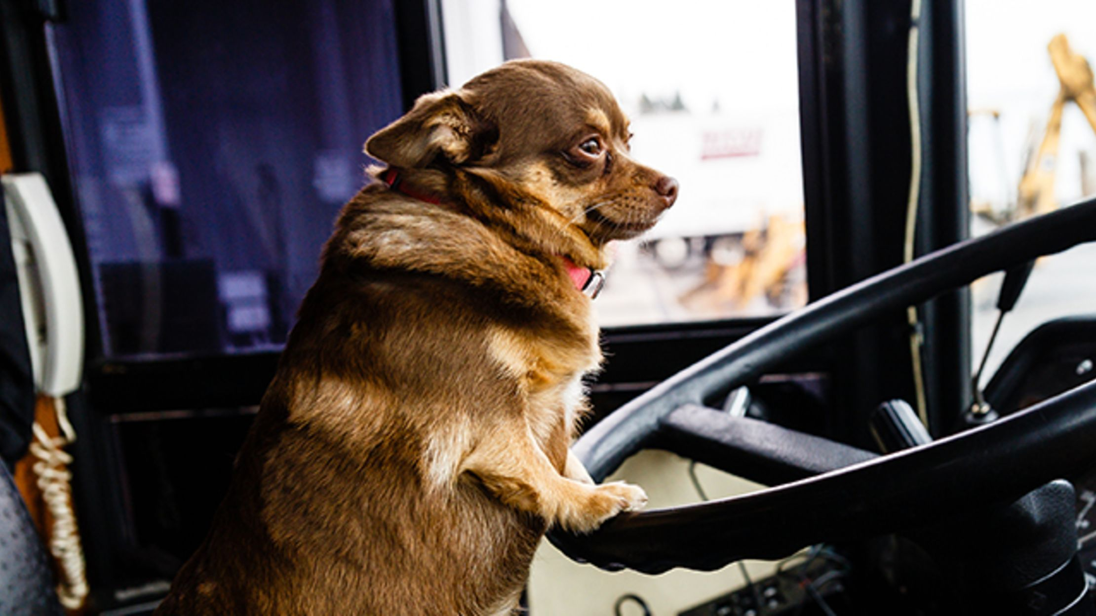 This Week, Dog Lovers Can Take a London Bus Tour With Their Furry Friends