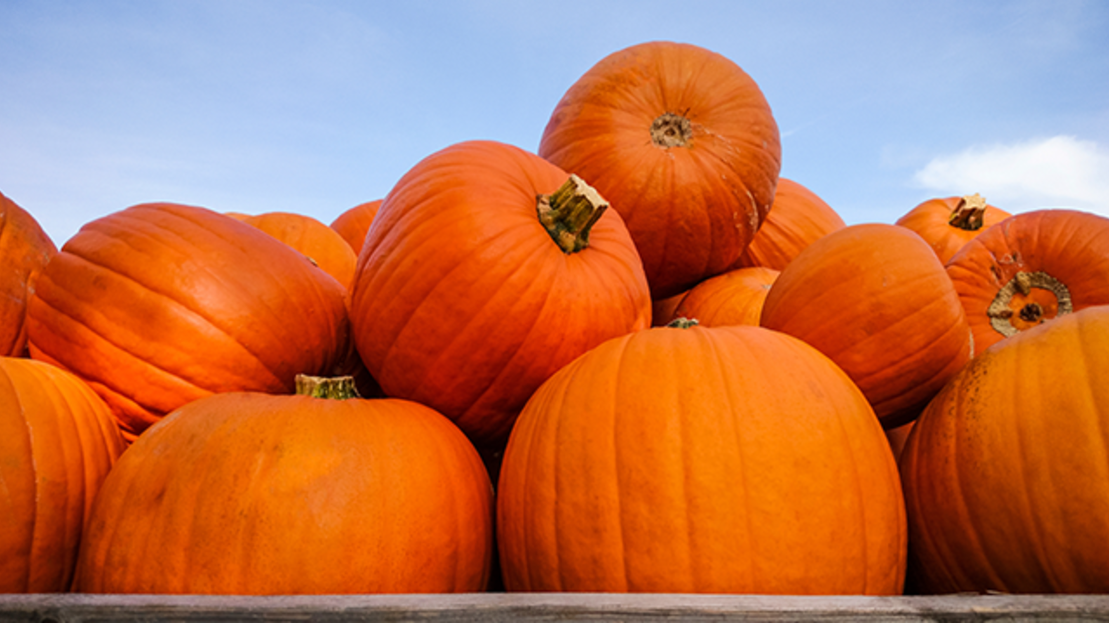 From Pasture to Porches: How Halloween Pumpkins Are Grown