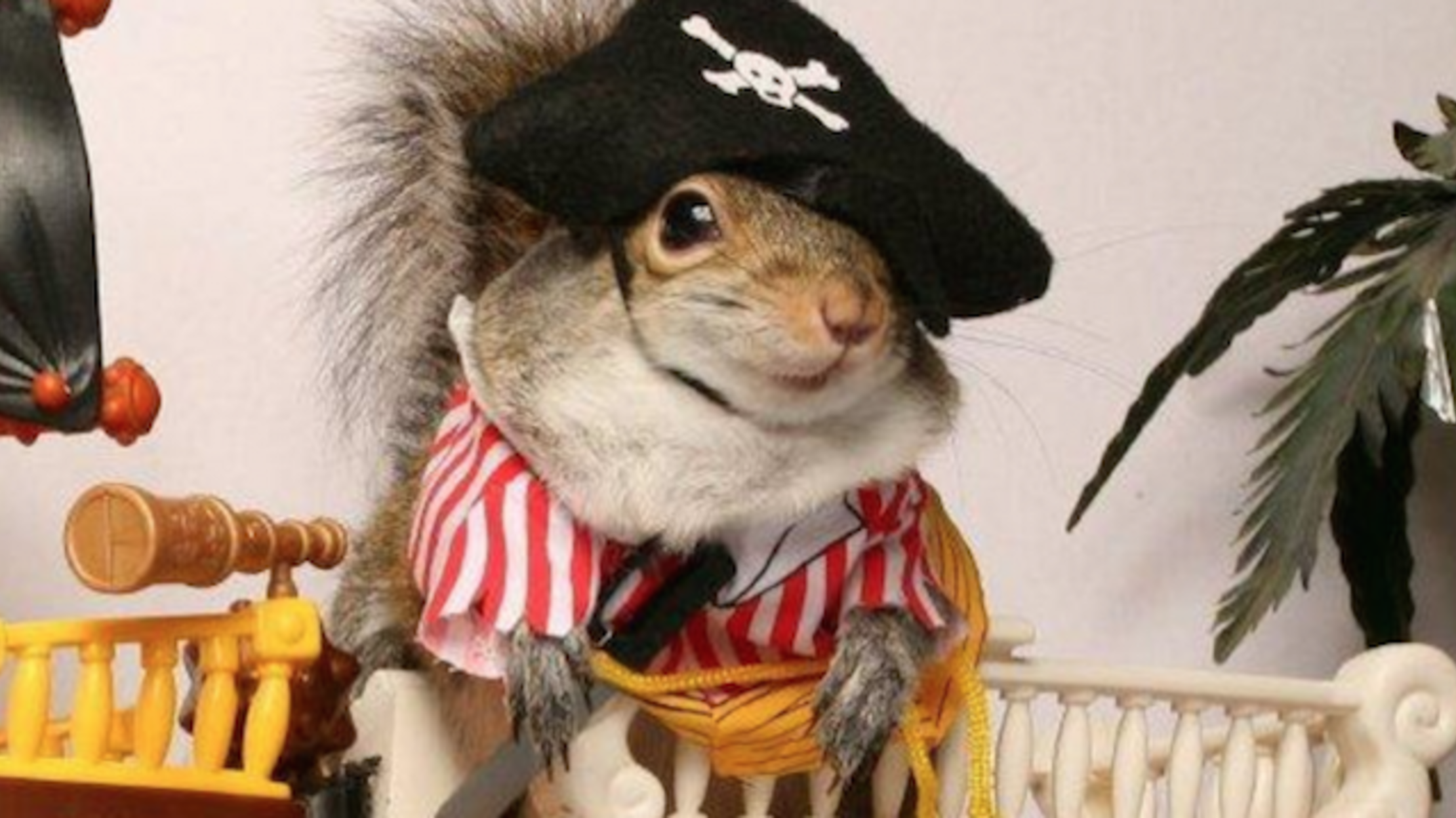 16 Adorable Halloween Costumes For Non Traditional Pets Mental Floss