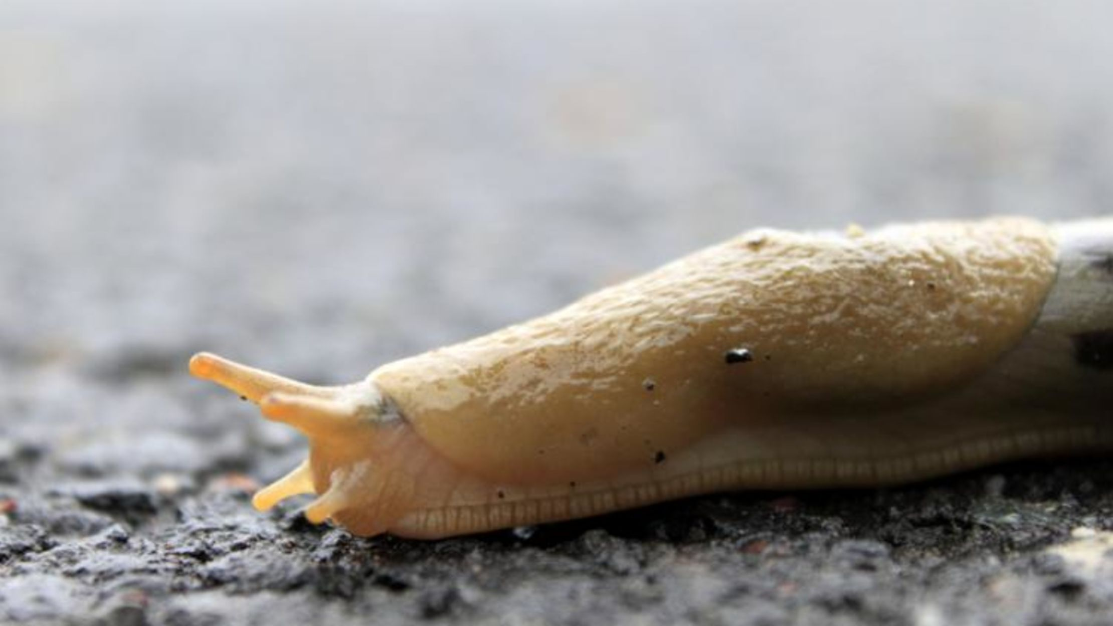 Image result for why do worms and slugs die from table salt?