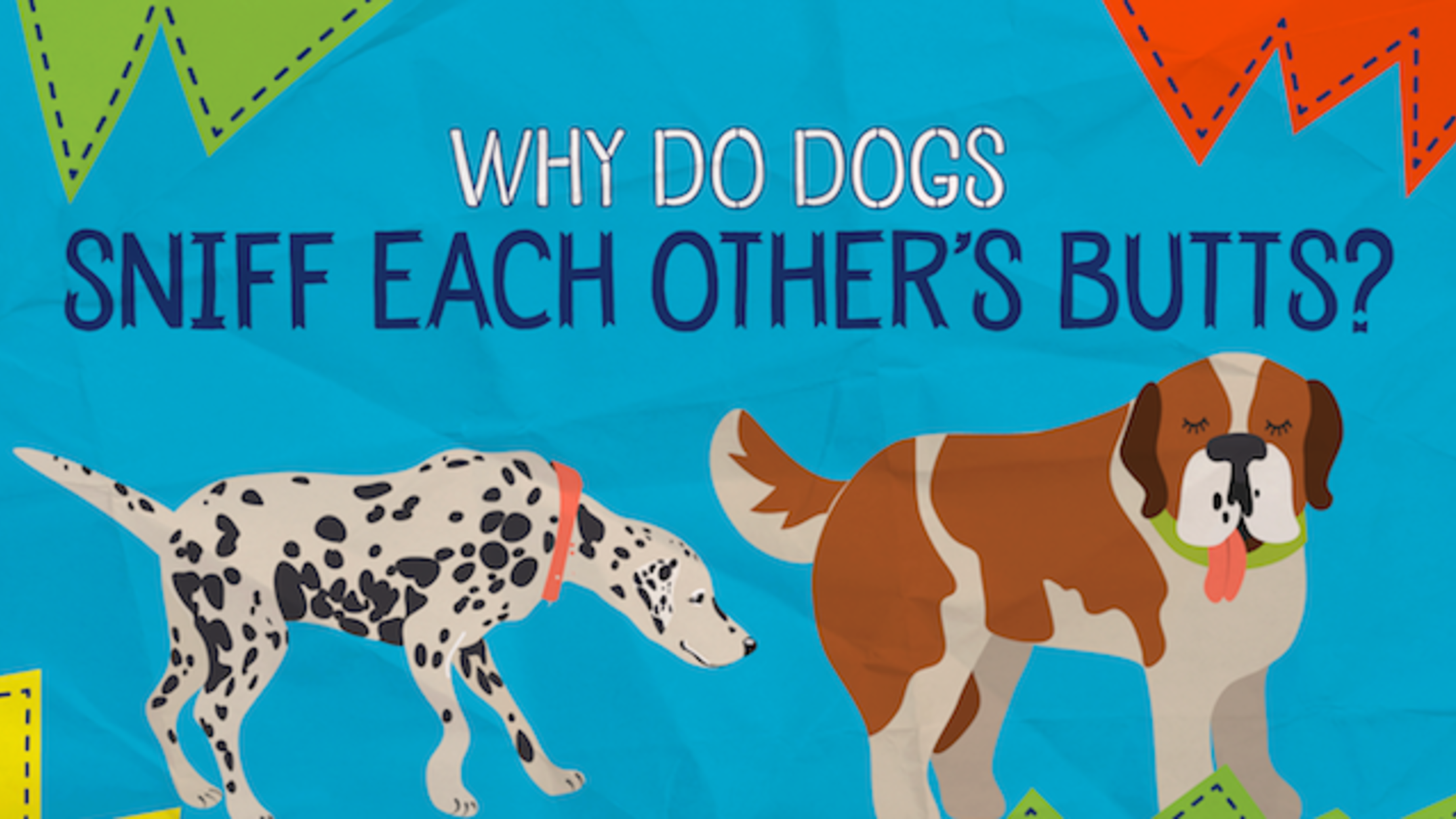 Why Do Dogs Sniff Each Other's Butts? | Mental Floss