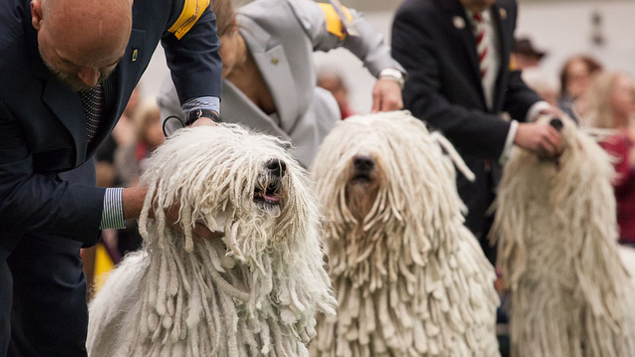 9 Fuzzy Facts About The Komondor Mental Floss