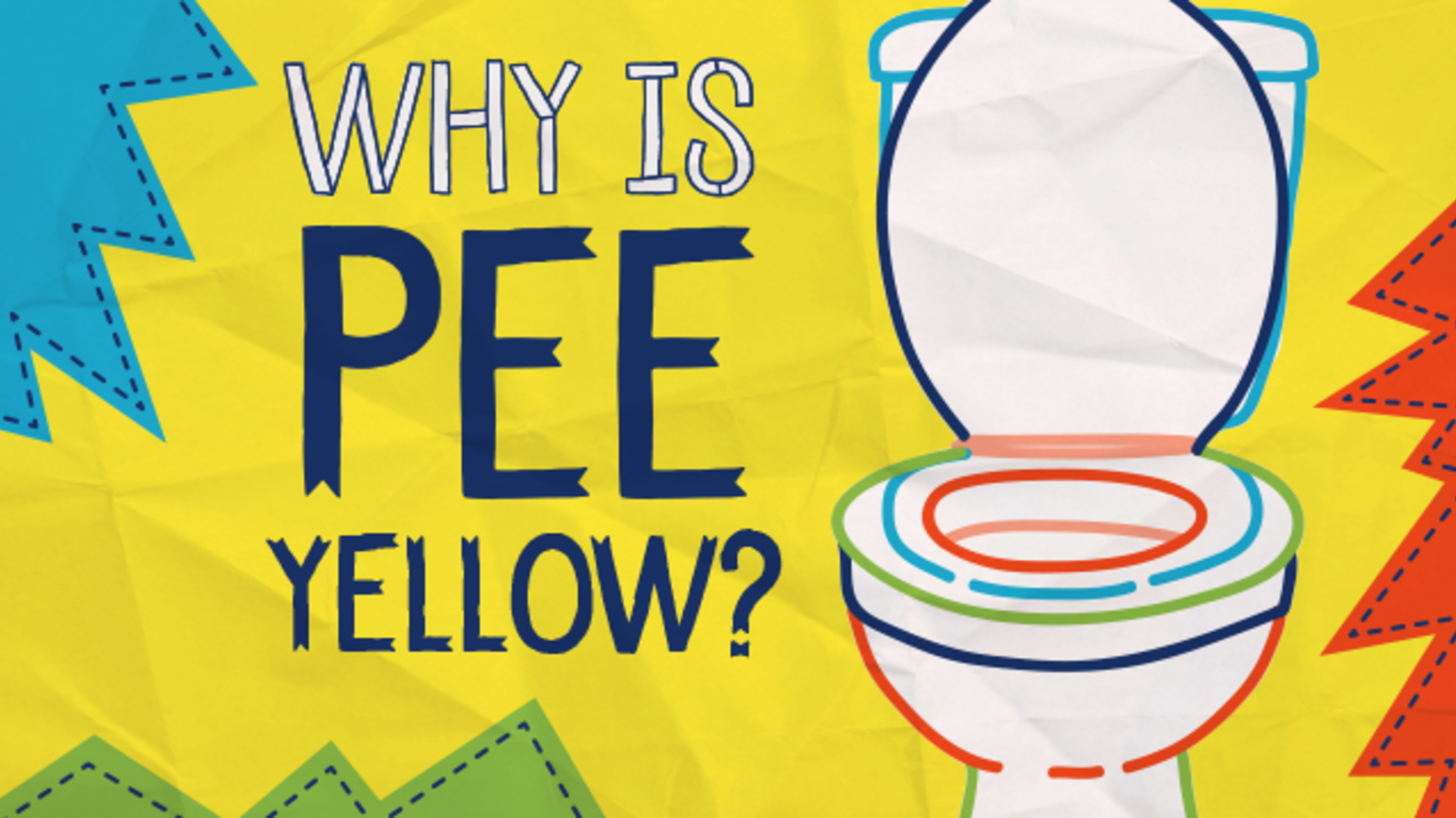 Why Is Pee Yellow?