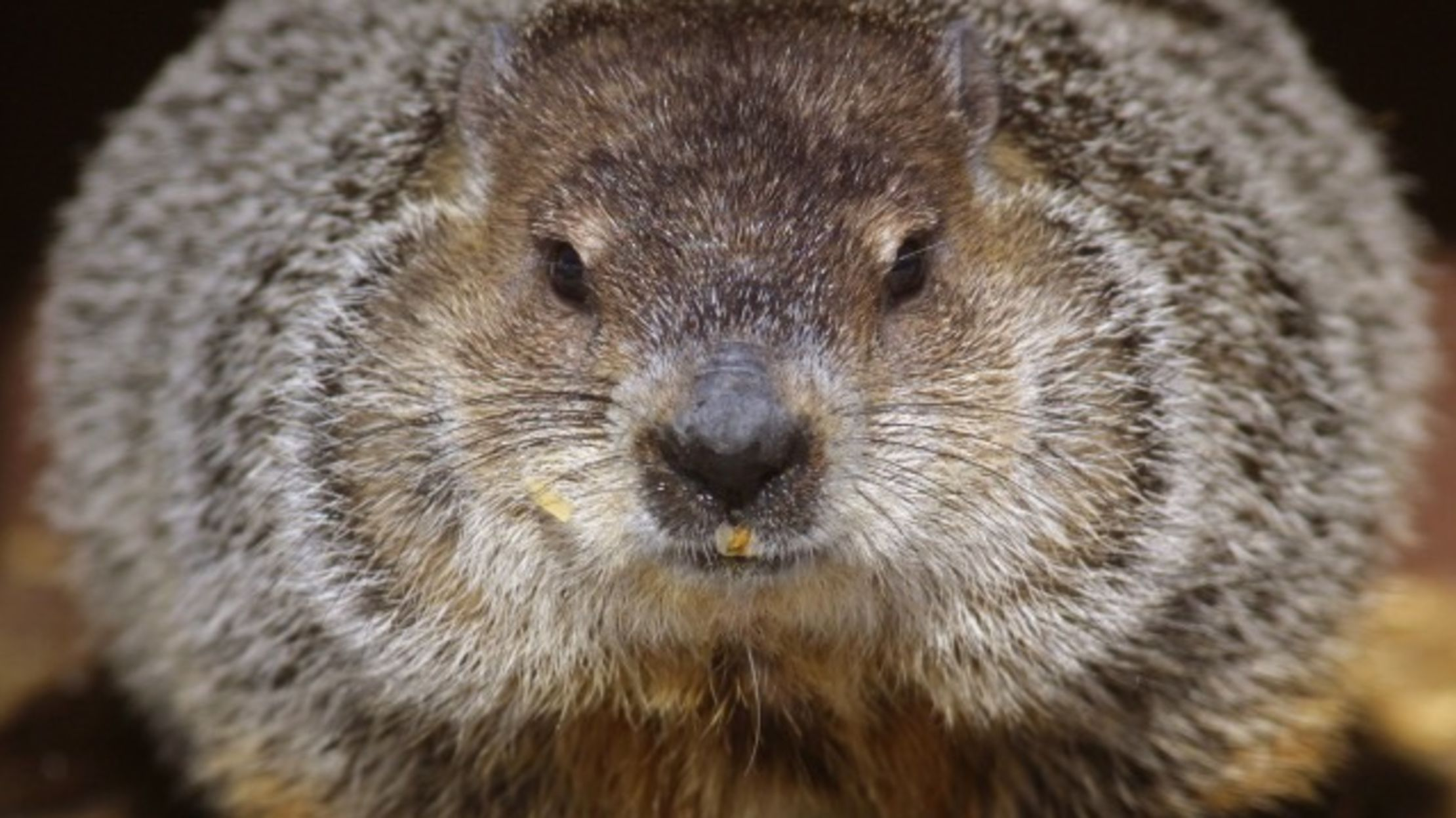Your Official Groundhog Round Up