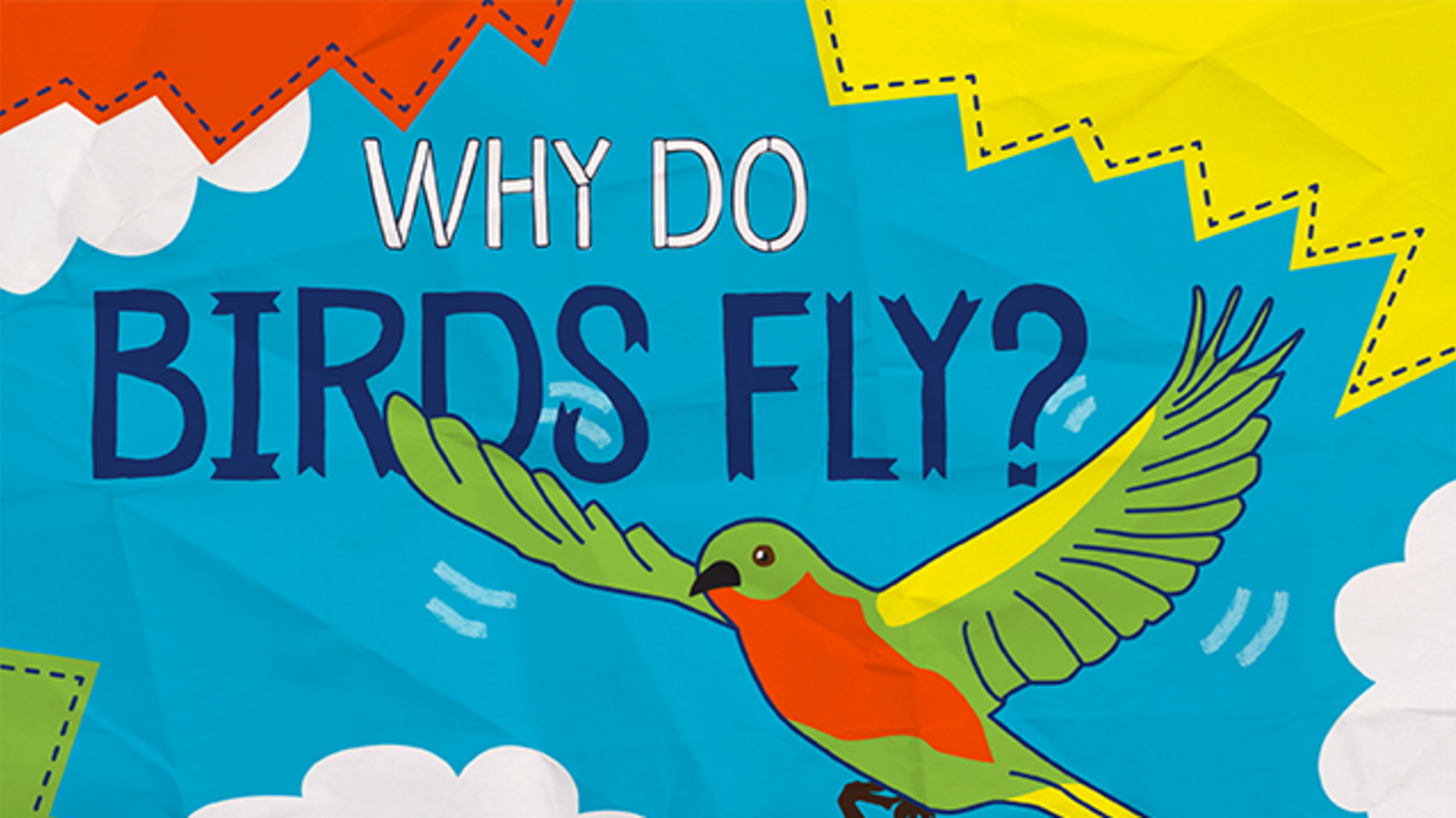 Why Do Birds Fly? | Mental Floss
