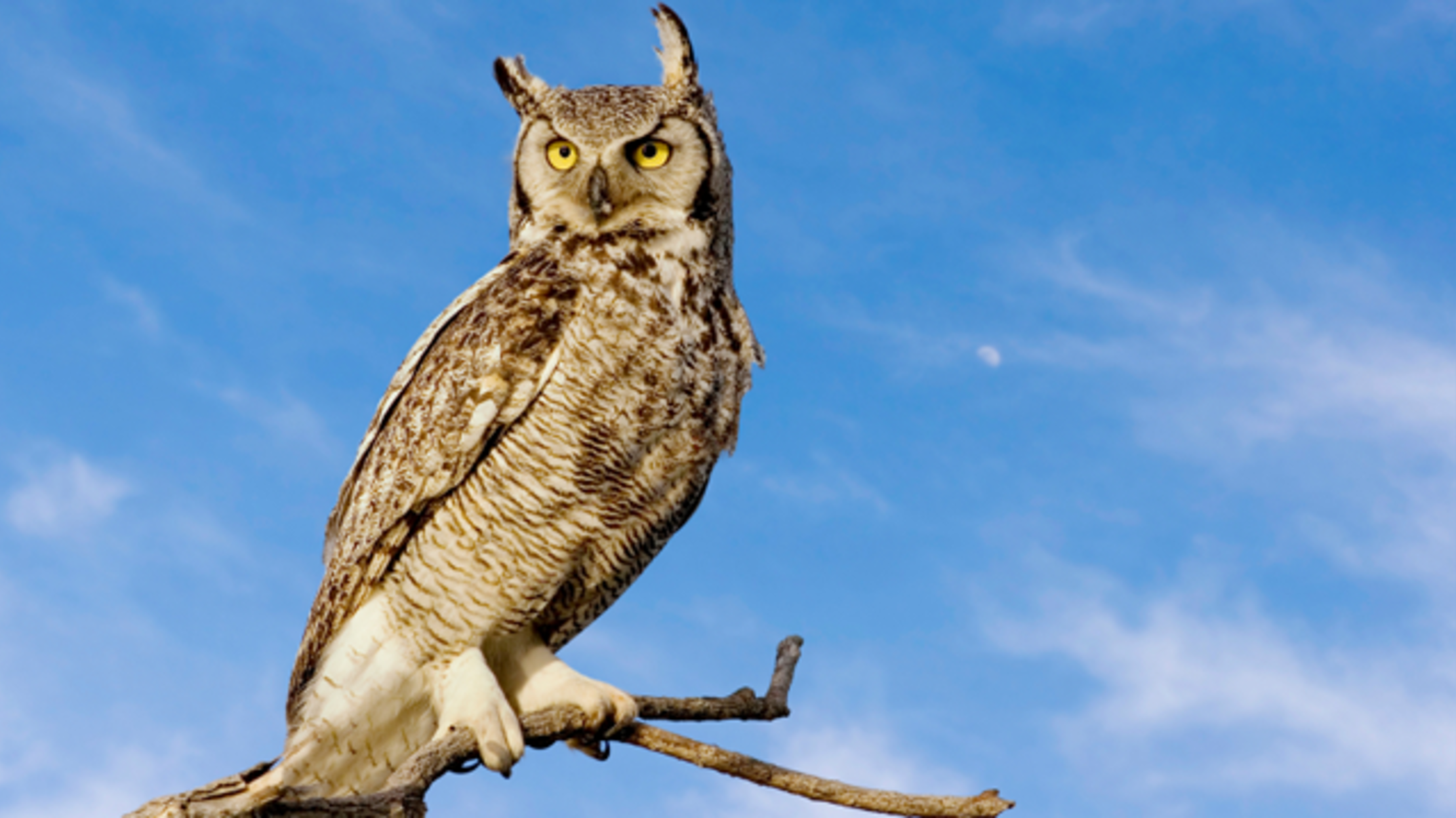 Are Owls Actually Wise? | Mental Floss