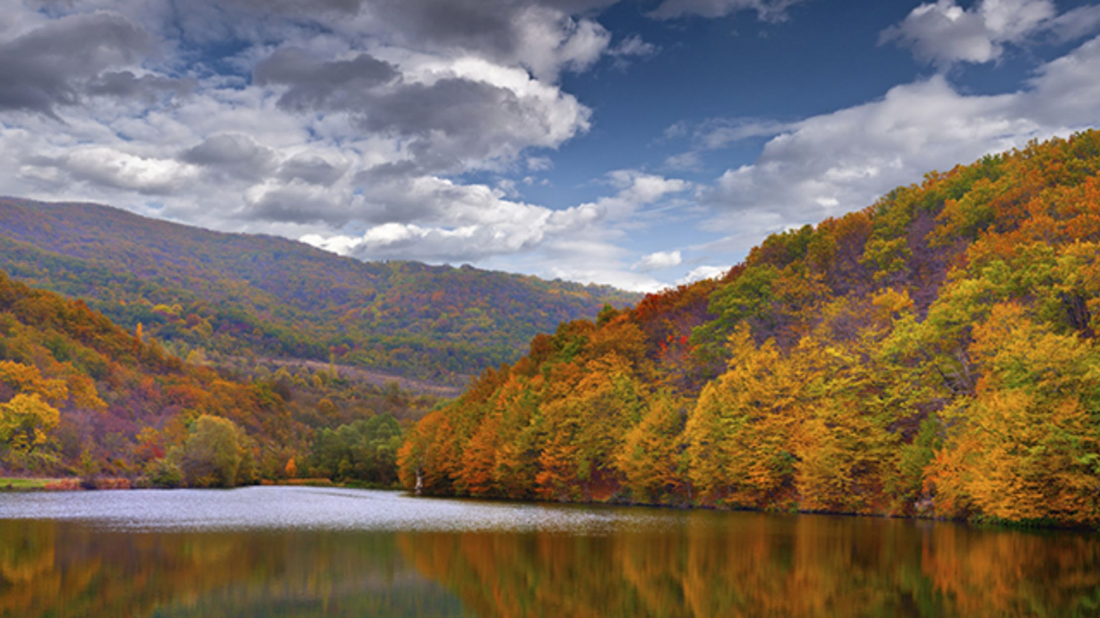 9 Trees With Spectacular Fall Foliage | Mental Floss