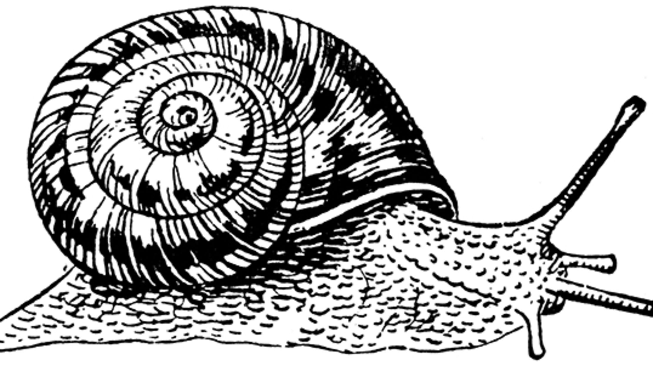 The Strange Tale of the Snail that 'Rose from the Dead