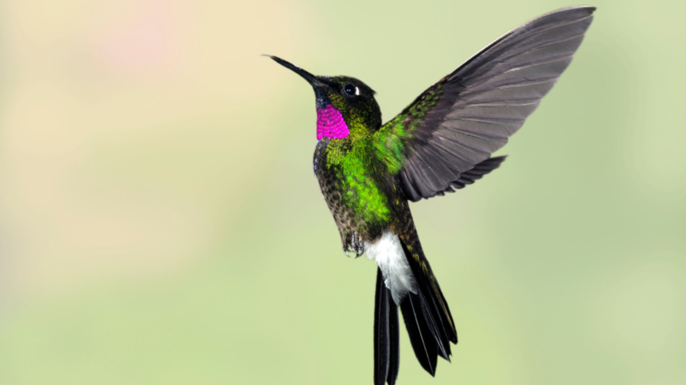 9 Adorable Facts About Hummingbirds