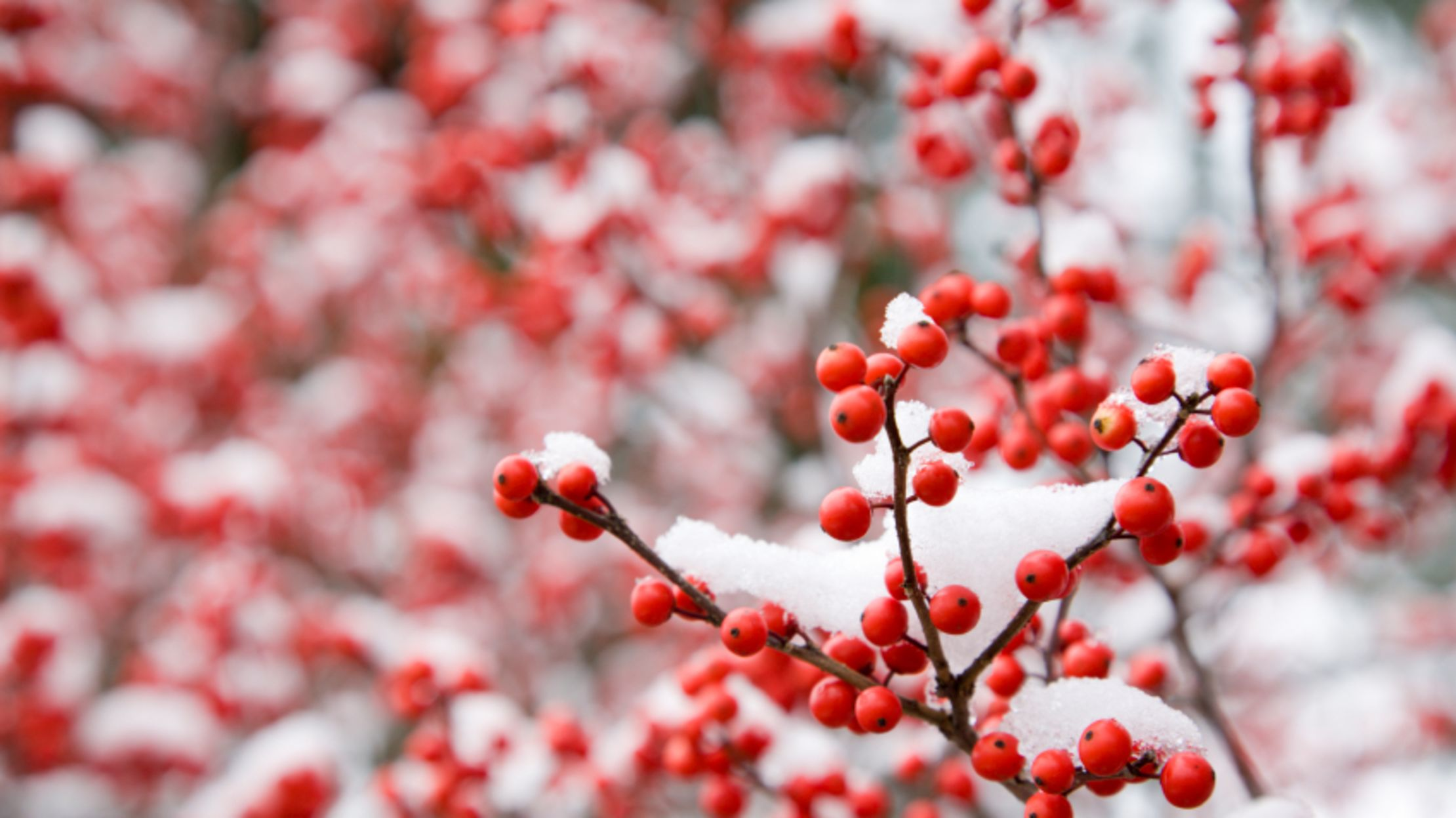 15 Incredibly Cool Facts About Snow | Mental Floss
