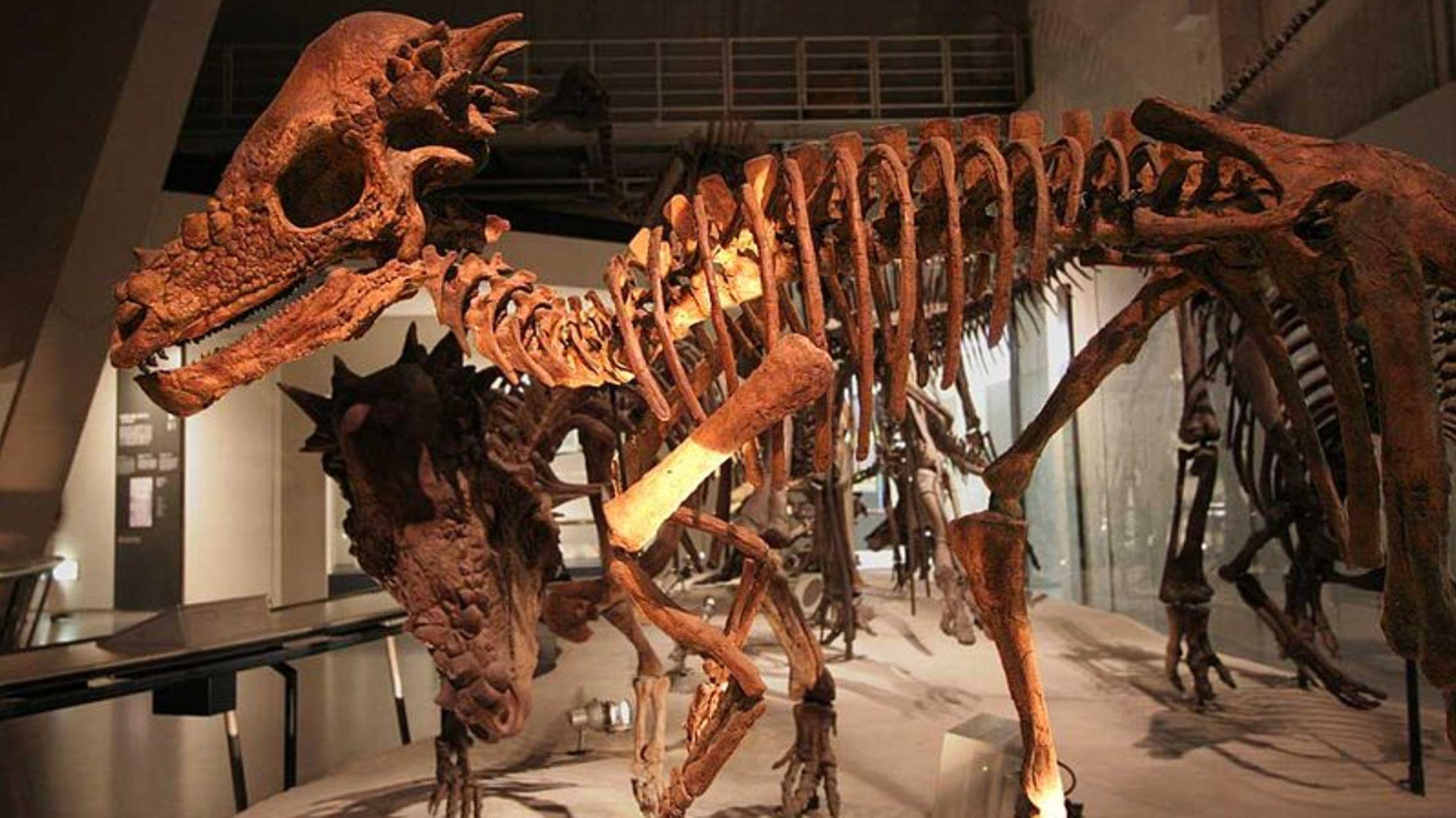 10 Bone Headed Facts About Pachycephalosaurus Mental Floss