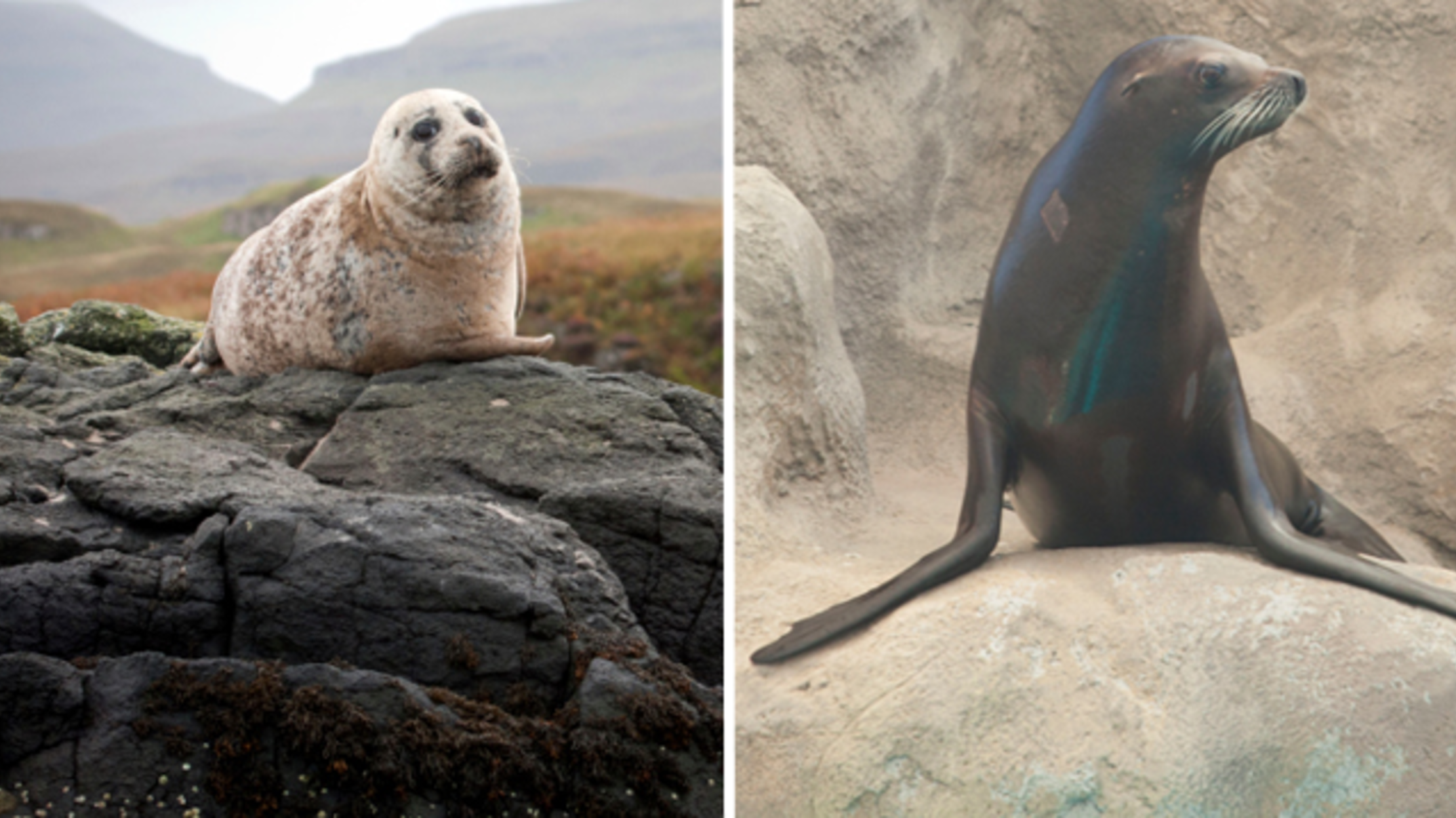 what is the difference between seals and sea lions