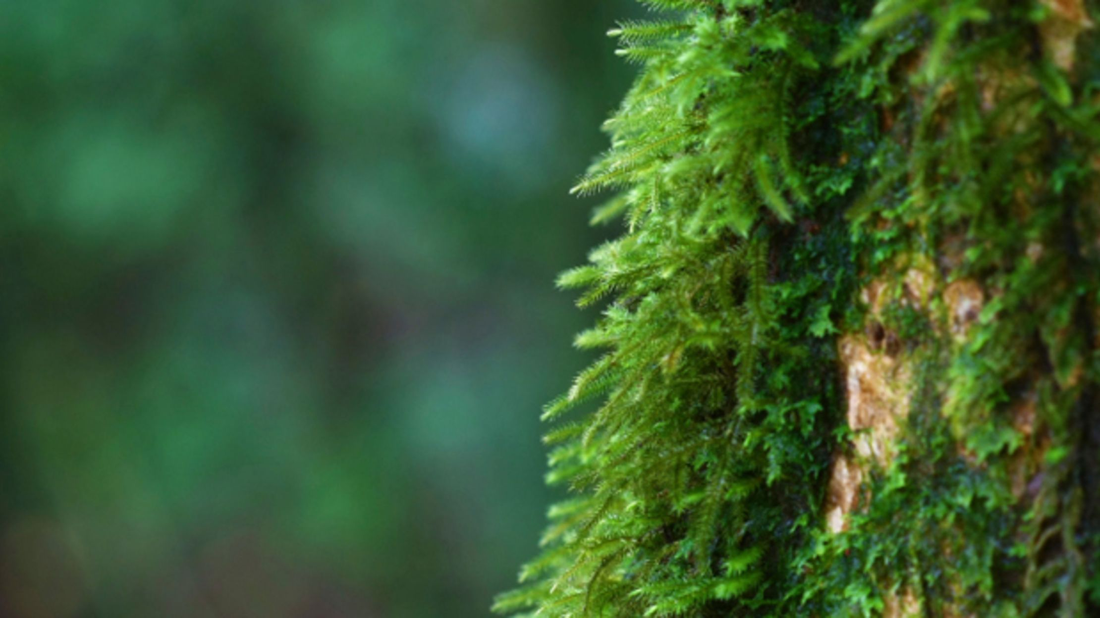 Does Moss Really Only Grow On The North Side Of Trees Mental Floss