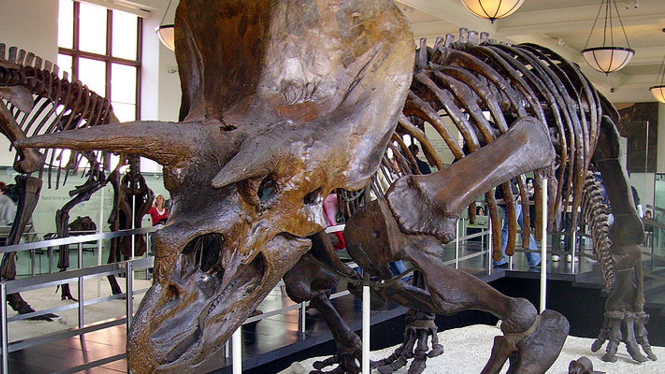 10 Things You Might Not Know About Triceratops | Mental Floss