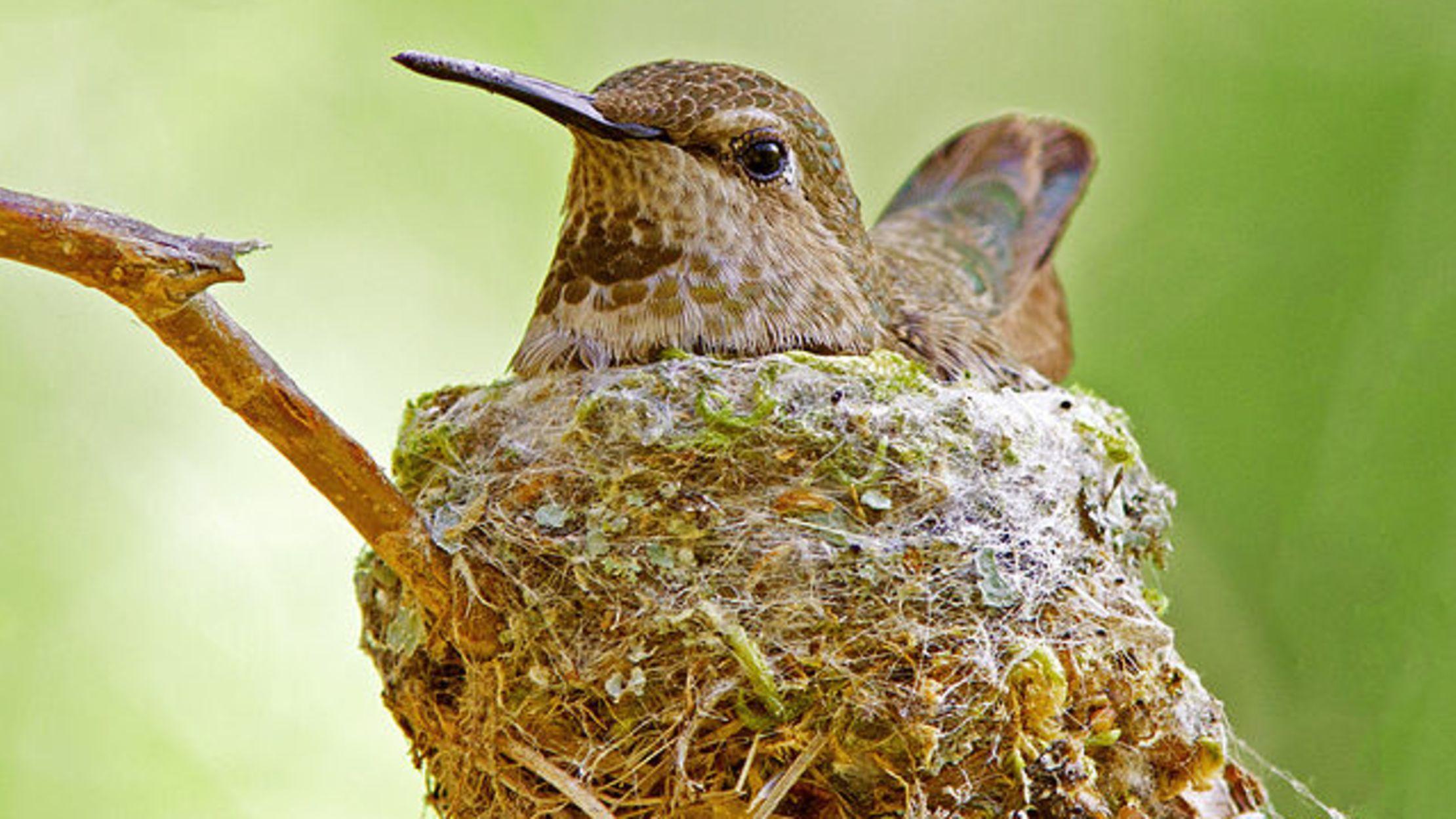 10 Weird And Wonderful Bird Nests Mental Floss