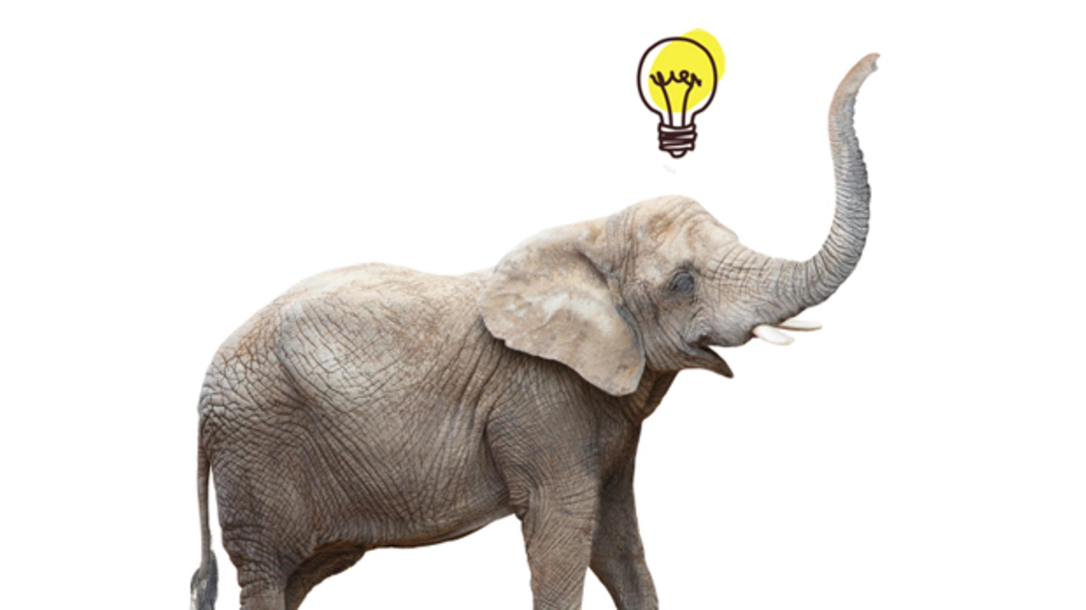 Elephant In Room That Needs To Be >> 7 Behaviors That Prove Elephants Are Incredibly Smart Mental Floss