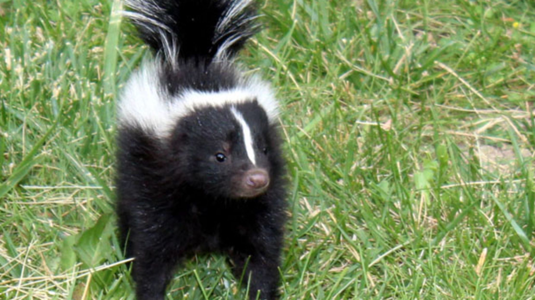 Lesser Known Names For Baby Animals