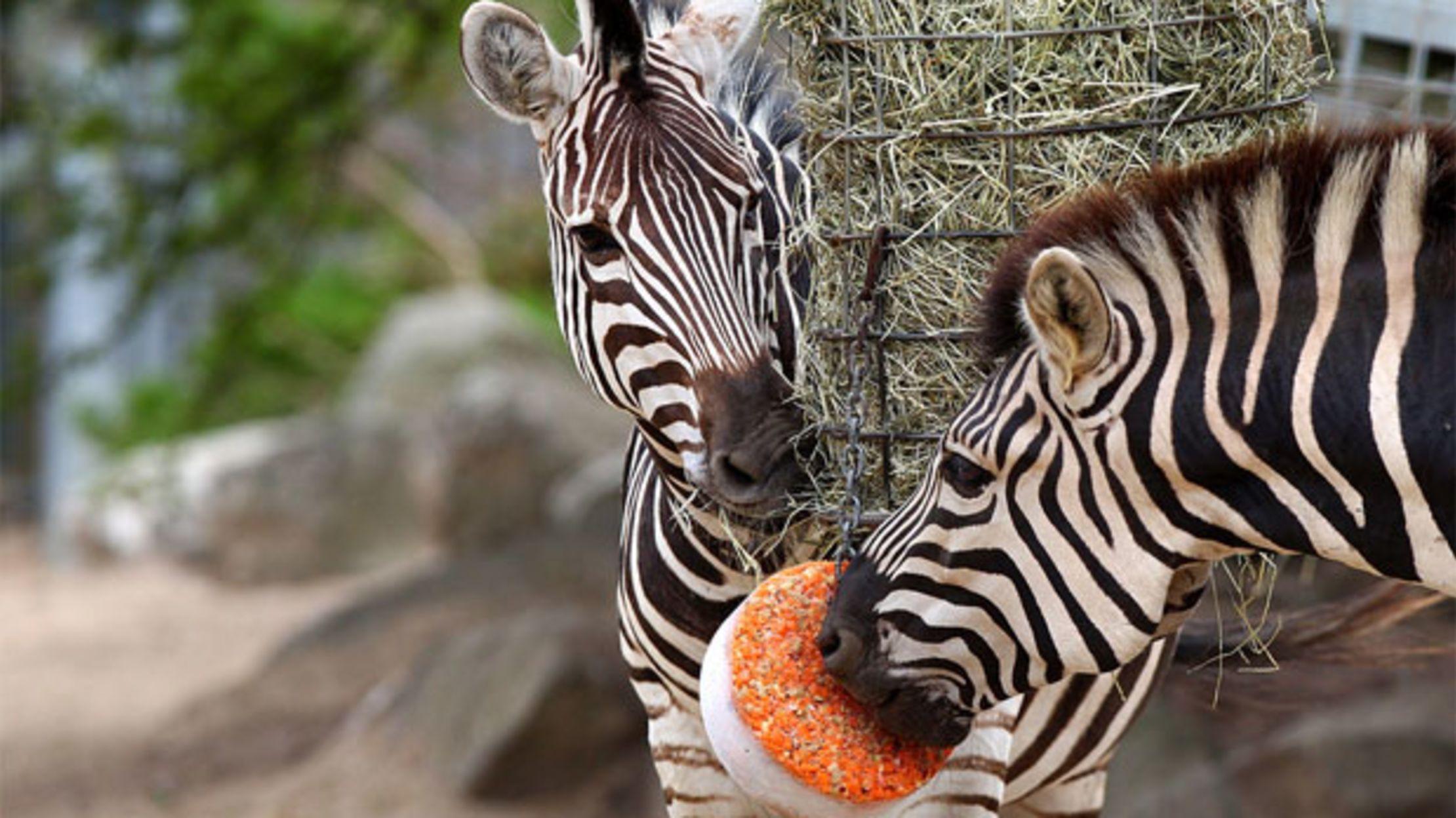 Класс молодцы, картинки из зоопарка