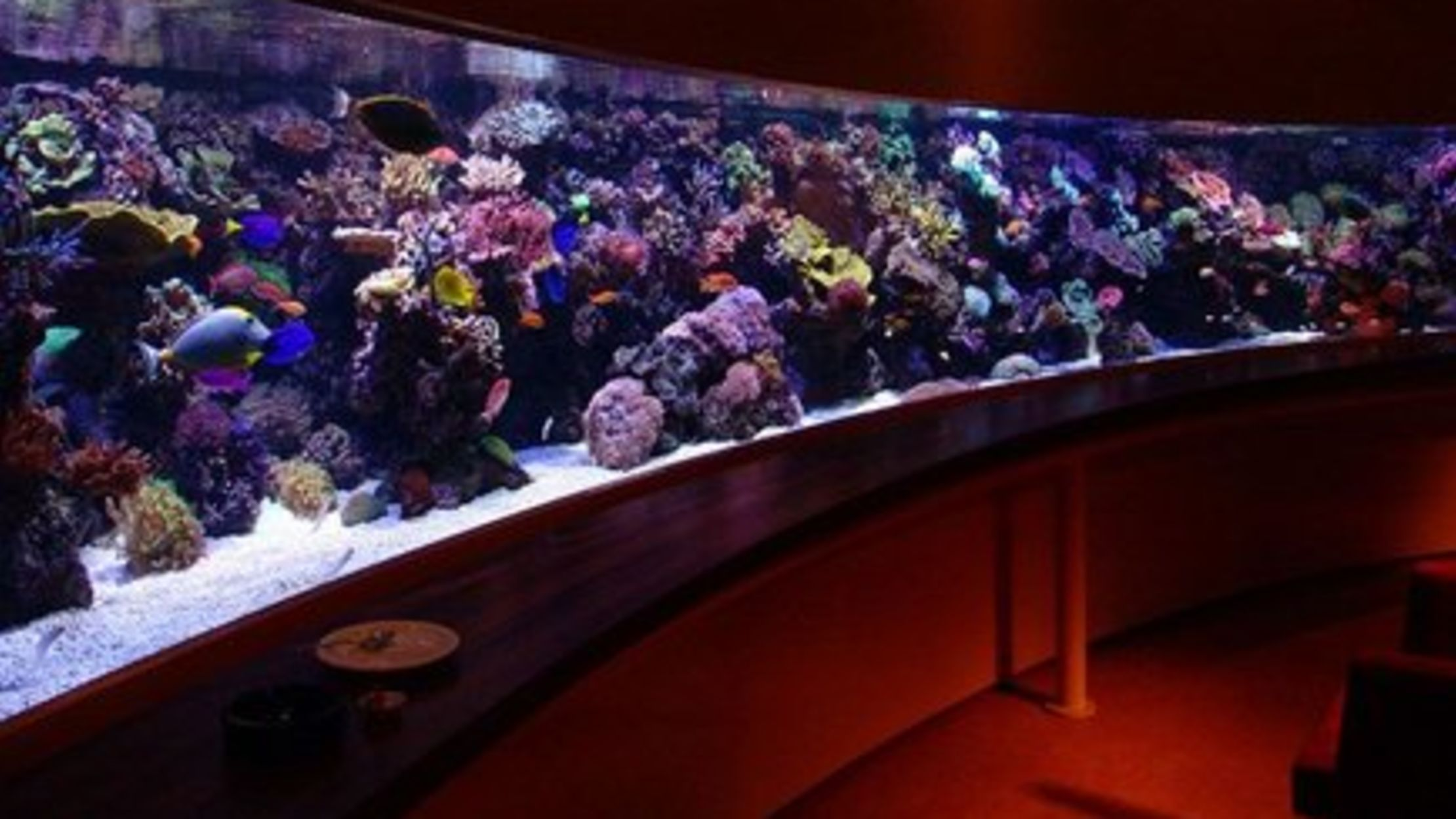 9 Really Cool Aquariums   Mental Floss