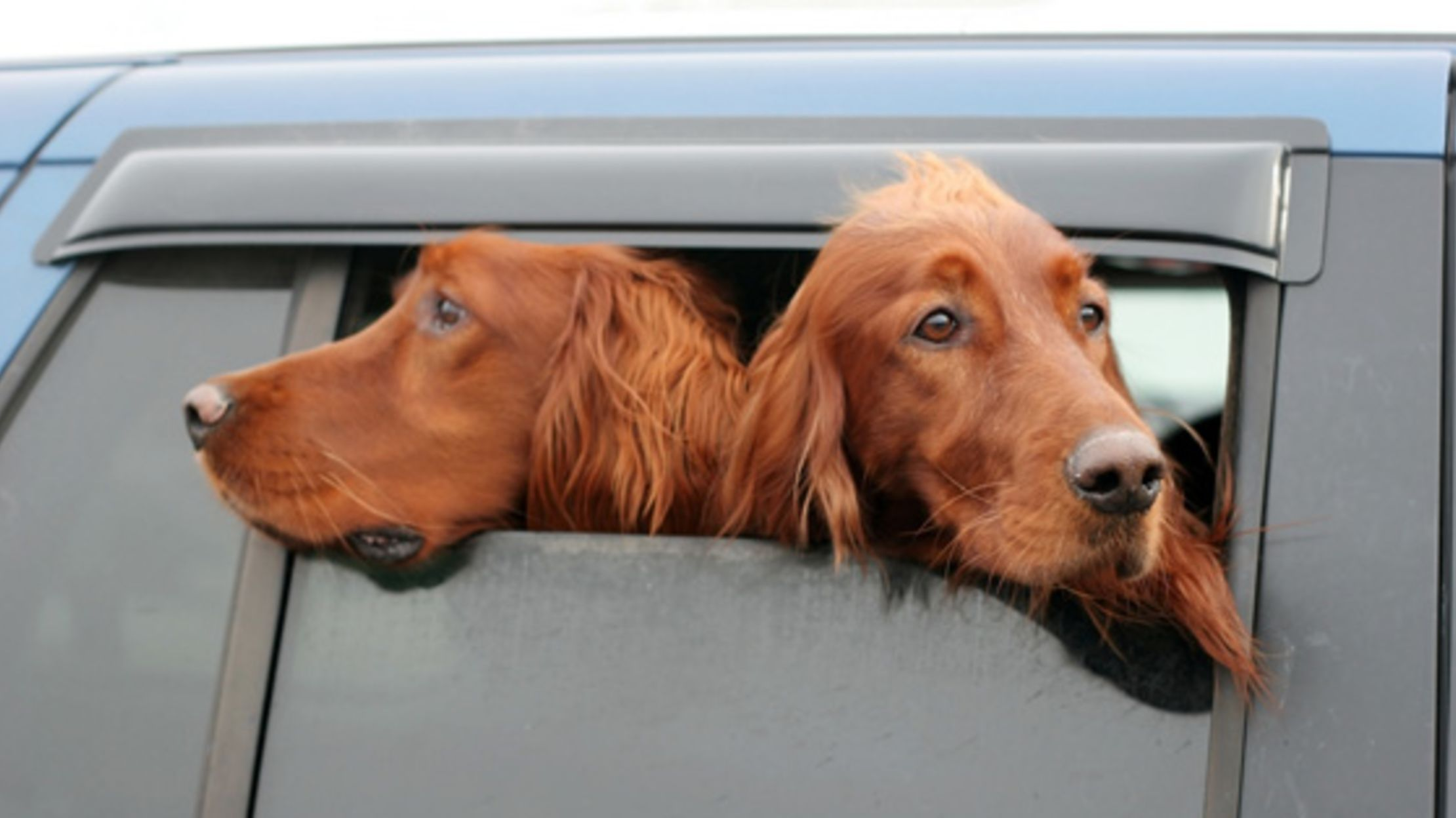 why do dogs stick their heads out of car windows? | mental floss