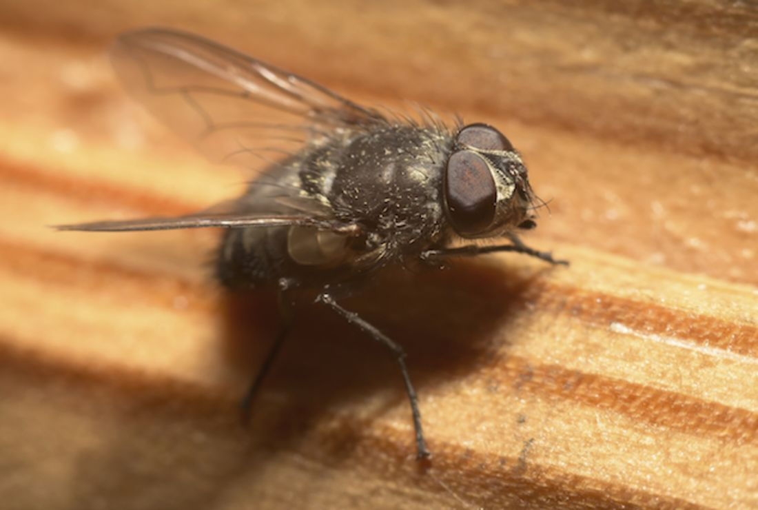 Do All Houseflies Hum In Key Mental Floss