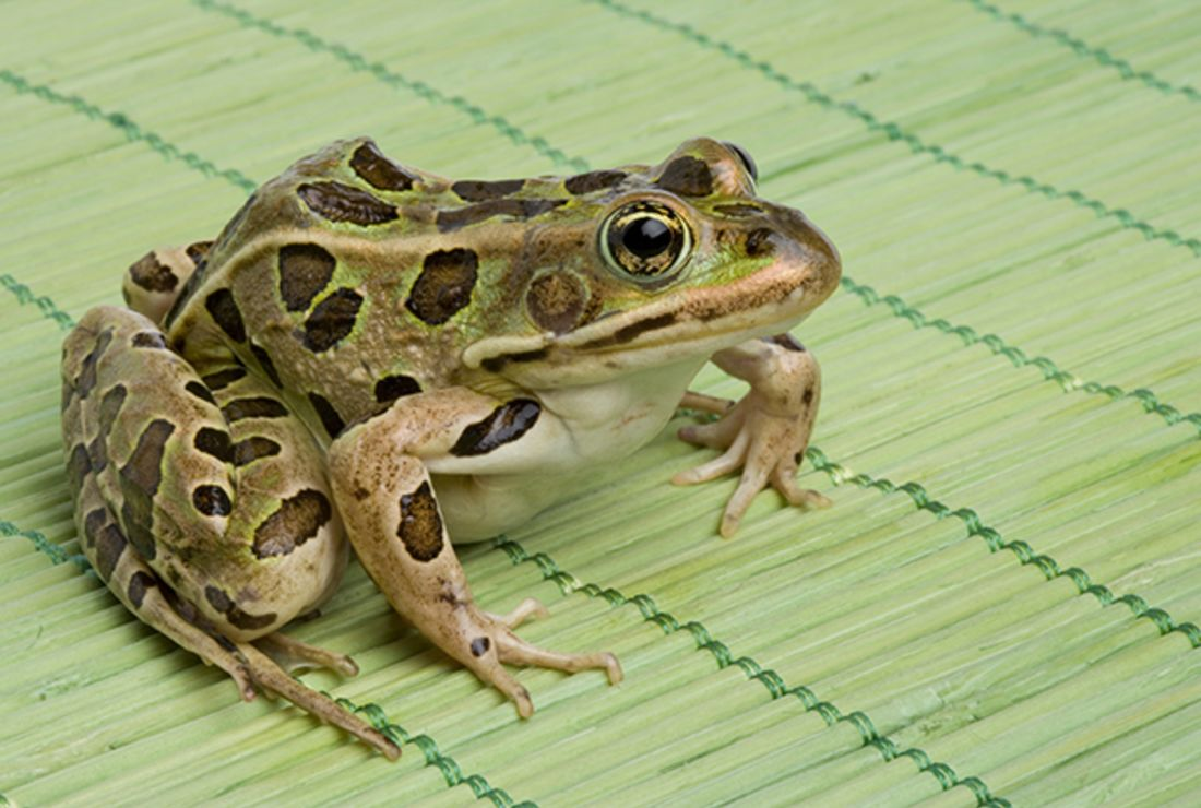 Frogs Eat with Their Eyes—Literally | Mental Floss