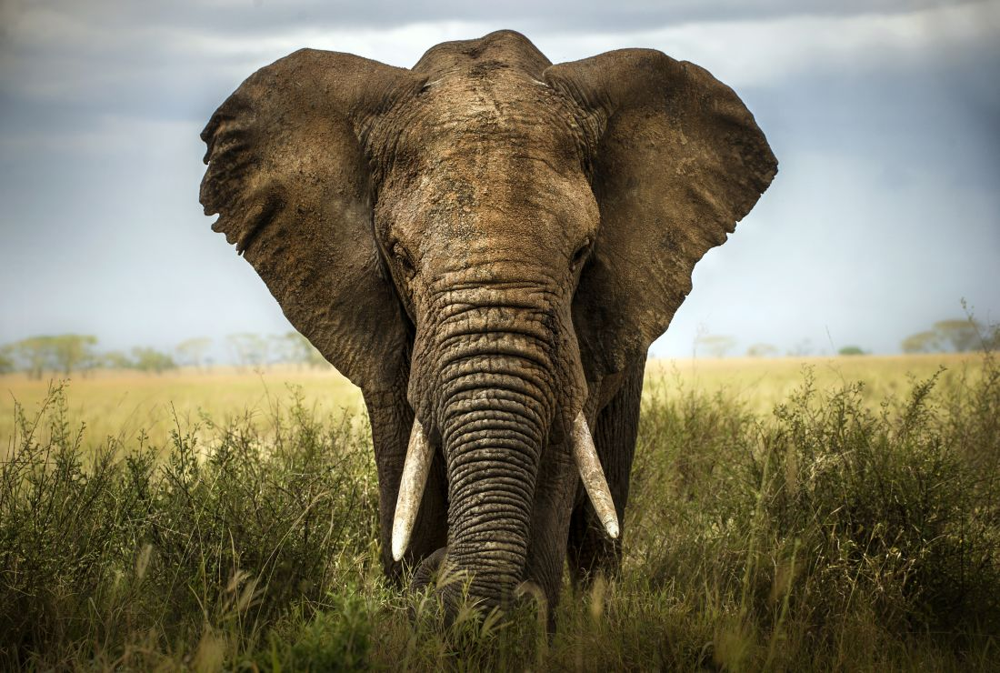 Amazing Fact: Abraham Lincoln had the opportunity to populate the United States with elephants. ... Read more here —