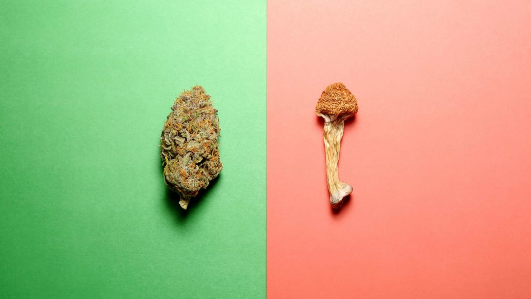 Will a psilocybin industry mirror the cannabis industry? Not necessarily.