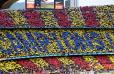 Der FC Barcelona und seine Stürmer-Träume