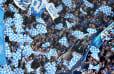Transfernews bei Schalke 04: Die heißesten Gerüchte um Neuzugänge
