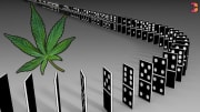 Cannabis legalization is on the ballot in 6 states  this November and the dominoes are starting to fall