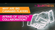 Why Are Big Cannabis Players Afraid of Legacy Collaboration?   The Edge ft Christine & Vlad