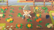 Animal Crossing Fall fish guide is here for those players looking to collect them all.