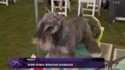 Barry Bonds' dog Rocky.
