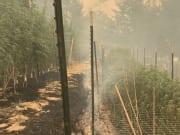 Wildfires destroy Sweet Creek Farms in California.