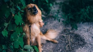 4 Simple Ways to Get Your Dog to Stop Barking