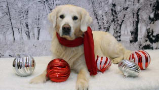 5 Holiday Foods That Are Dangerous for Pets