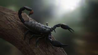 La figura del escorpión ha sido usada durante años como símbolo de obscuridad, venganza, y manipulación. Los sueños que involucran a esta criatura venenosa...