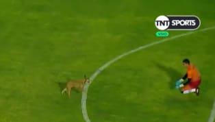 Entre las cosas curiosas que siempre deja el fútbol argentino, esta vez un perro fue el protagonista del retraso del encuentro deSan Martín de...