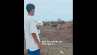 El hijo de Quique Setién colgó un video a su cuenta de instagram en el que le preguntaba a unas vacas si el Barcelona ganaría la Champions League. El corto no...