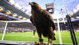Es ist eine jahrzehntealte Tradition im Estadio Da Luz zu Lissabon - vor einem jeden Heimspiel dreht der vereinseigene Adler seine majestätische Runde über...